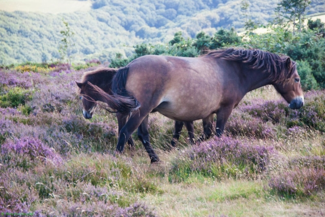 2019 Exmoor National Park
