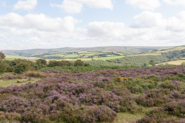 20190806.c-Exmoor National Park-3046