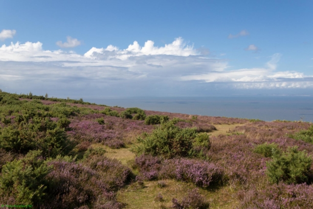 20190806.c-Exmoor National Park-3051