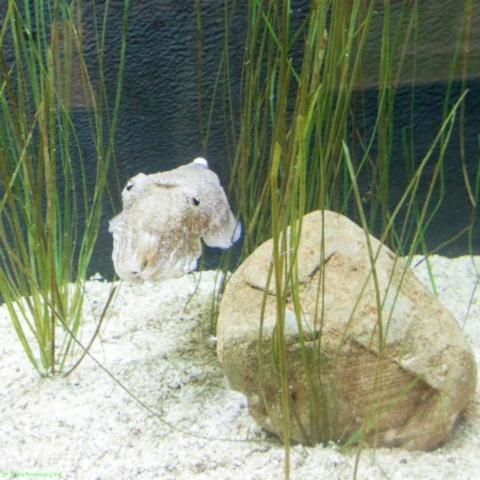20190812.a-Plymouth-Nat.Marine Aquarium-3795