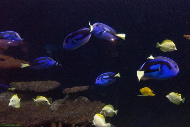 20190812.a-Plymouth-Nat.Marine Aquarium-3882