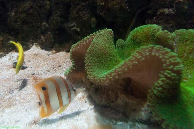 20190812.a-Plymouth-Nat.Marine Aquarium-3895