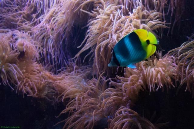 20190812.a-Plymouth-Nat.Marine Aquarium-3897