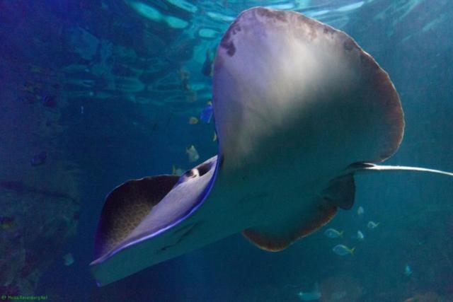 20190812.a-Plymouth-Nat.Marine Aquarium-3926