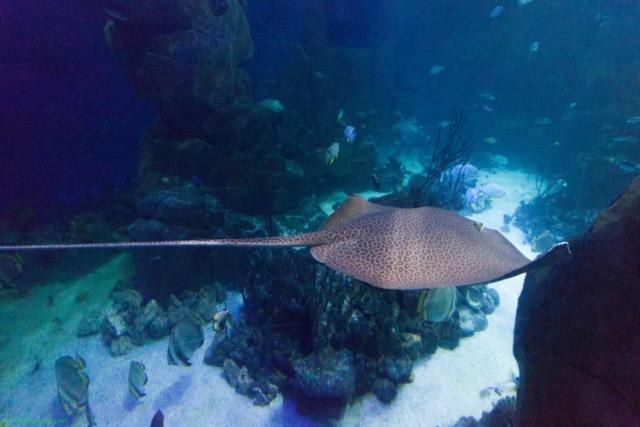 20190812.a-Plymouth-Nat.Marine Aquarium-3932
